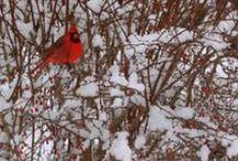 Animal Residents / by Toronto Botanical Garden