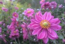 What's in Bloom: Fall / by Toronto Botanical Garden