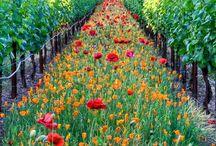 Gardening / by Regiane Wochler