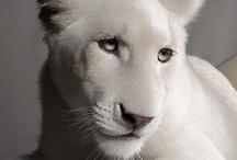 Beautiful Beasts / by Skylar Zipp