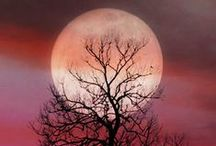 Full Moons & Forests (Trees) / Whispering Trees & Full Moons         / by Lisa Michelle Troyan