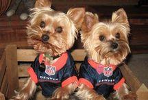 Broncos Best Friends  / by OFFICIAL Denver Broncos