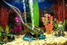 Aquariums / by Mary O