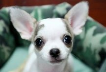 All about Adorable, cute, Awww, I want it...ANIMALS.....todo sobre animales. / Animals..... / by Alex's