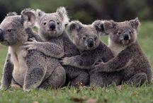 Australia / by Renate Russouw