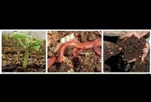 Understanding All About Vermiculture, Vermicomposting , Composting Worms  / Information about raising worms that will help you get off to a great start! Get the Real facts about raising worms and making vermicompost! / by Larry Hall