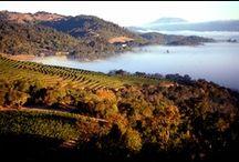 Napa Valley Living / by Sullivan Vineyards