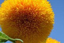 Garden Goodies / by Josie Rinehart