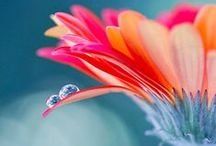 ✿*♡*♥  Petals  ♥*♡*✿ / ❀~ I must have FLOWERS, always and always. ~❀ / by Piyanka Kar Mitra
