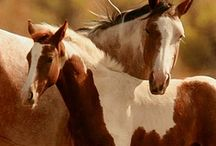 Horse Lover / Beautiful Horses. I'm truly amazed by these beautiful creatures. / by Belinda Sue