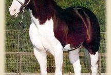 HORSES / by Linda