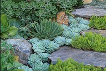 Garden ideas / by Mel Bates