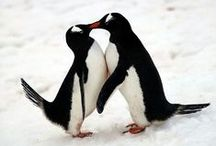 Penguins & Pugs <3 / by Amanda DiBella