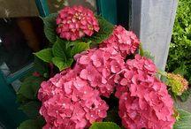Flores, jardinagem, hortas e afins / by Noemi Buba