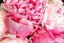 Flowers & Gardens / by Maria Velazquez