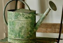 Watering Cans / by Maggie Wilson