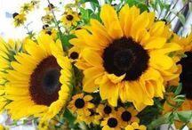 Flowers--Sunflowers & Daisies / by Nancy Streukens