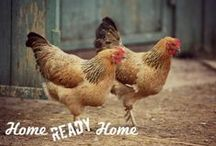 Chickens / everything chickens / by Home Ready Home