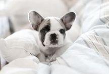 Doglets / by Treats a la Bark