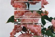 FLOWERS IN ART / by Pilar Blasco