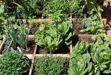Permaculture Gardening / by Ches Roberts
