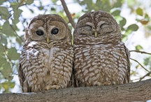 Owls / by Solveig Strand