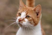 Cat stuff / by Charlene Robinson