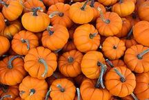 Autumn Bliss / Decorations, food, DIY, and fun for fall.  / by Wantable