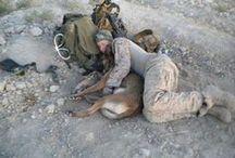 "War Dogs / ""That's not a dog, that's a Marine.""  GySgt Leroy Jethro Gibbs, USMC,Ret. / by Toni Watt"