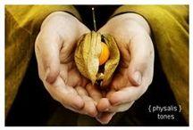 Miechunkowe Love / Physalisowe inspiracje, nie tylko jedzeniowe. / by Puffins