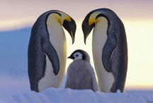 Mom & Baby Animals / Thank you for following. Have fun pinning. / by Kelly Tran