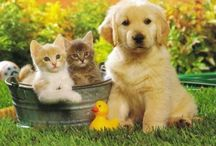DOGS, CATS & Animals 2 / Thank you for following. Have fun pinning. / by Kelly Tran