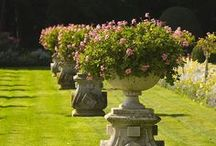 Garden - Containers / by Lyoness Rose