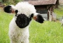 Love for Ewe / by Woolrich Inc.