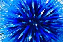 Intense Blue / by Ro