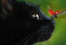 Cats & more cats / by Sherry DeWeese
