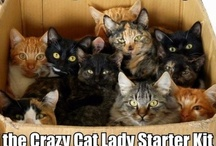 I'm a Crazy Cat Lady! / by Nicole Swopes