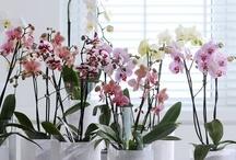 flowers / by connie estrada