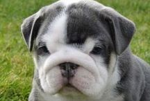 Bulldogs / by Puppy Names Plus