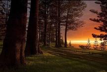 Beautiful Nature - Paths/Roads / by Andrea Martinez