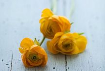 Flower / by Kathy Alimi