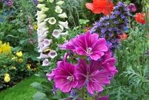 Gardening/Outdoor Ideas / by Betsy Cheek