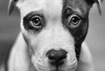 Dogs / by John Ladd