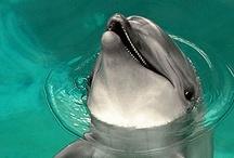 dolfijnen en walvissen / by Ria Smid - Counselor/Coach