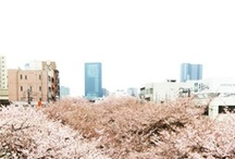 places  ✈ / by TWM ミⓛㅅⓛミ