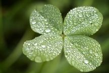Ireland / by Michelle