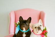 Frenchies & Bulldoggies  / by Kitty Eckert