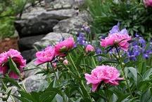 Gardens! / by Jody Blake