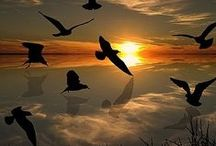 Birds / by David Ledger