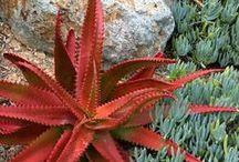 Plants / by Angela Camarata